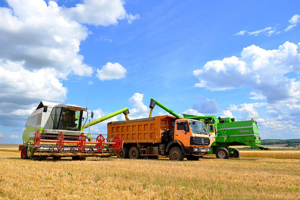 Grain transportation by trucks